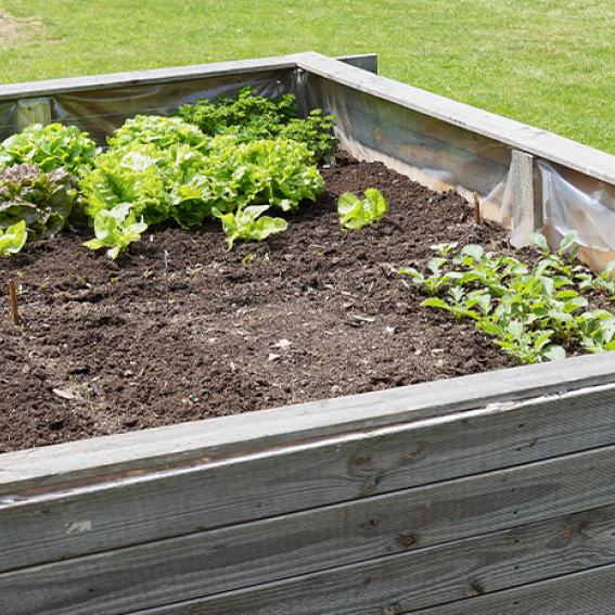 wicking bed garden